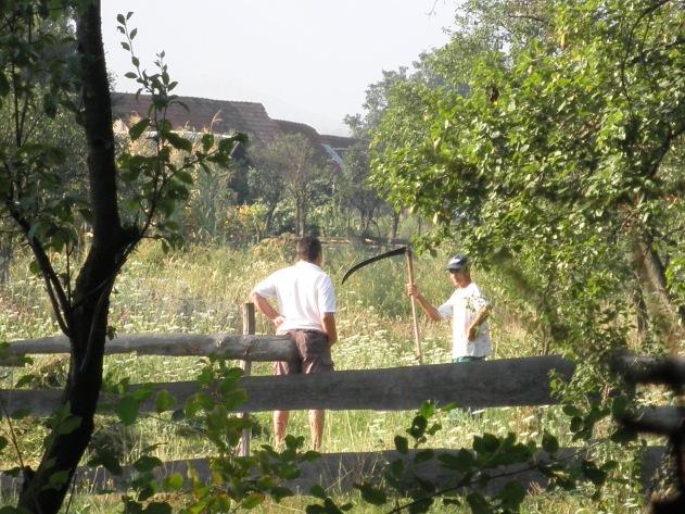 Werk op het veld