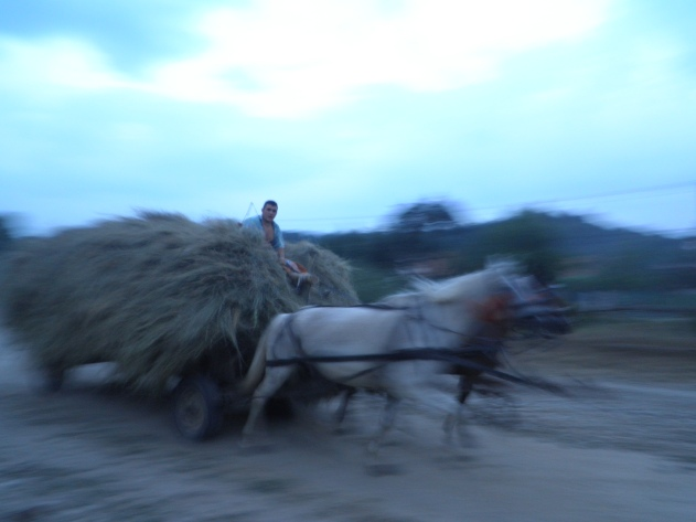 Voortrazend paard en wagen