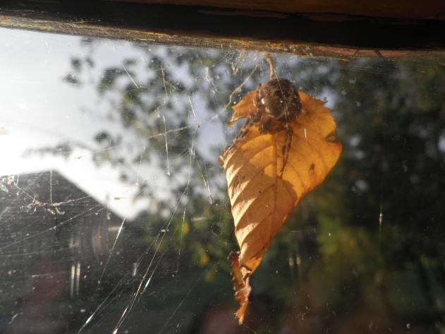 Spin houd er bijna mee op.