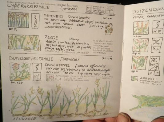 Mijn boekje over plantenfamilies