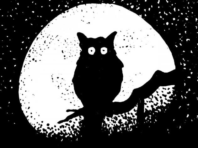 Uil in de nacht