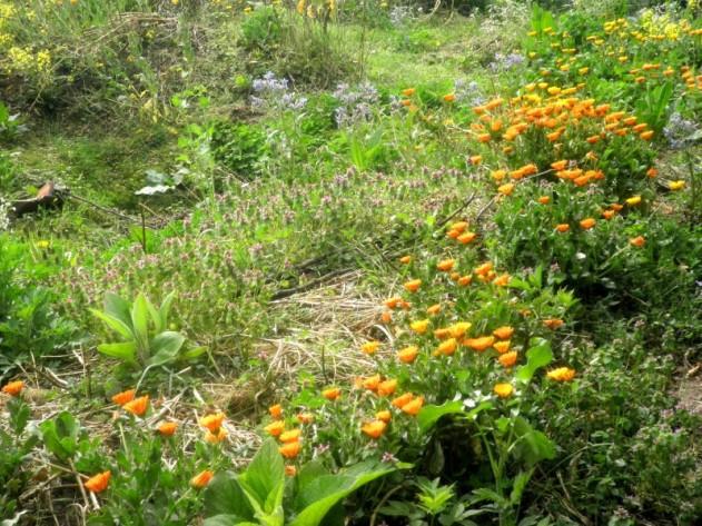 Tuin op dertien april tweeduizendveertien