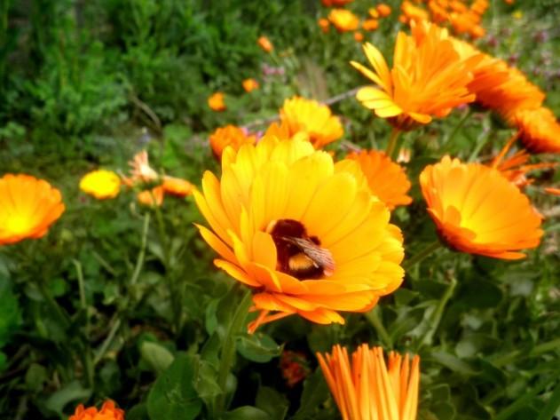 Rustend hommeltje in oranje wieg