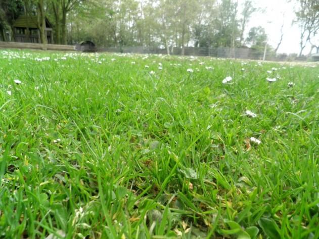 Gras zonder plas