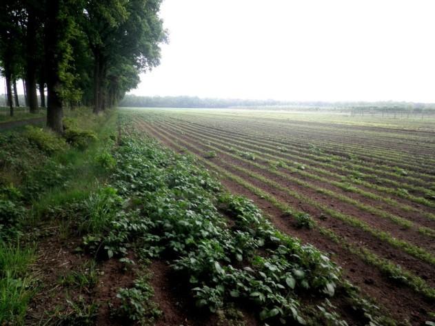Randen van een aardappelveld