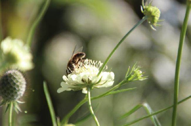 Bloemen uit Roemenië (1)