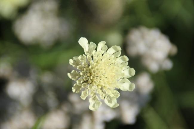 Bloemen uit Roemenië (2)