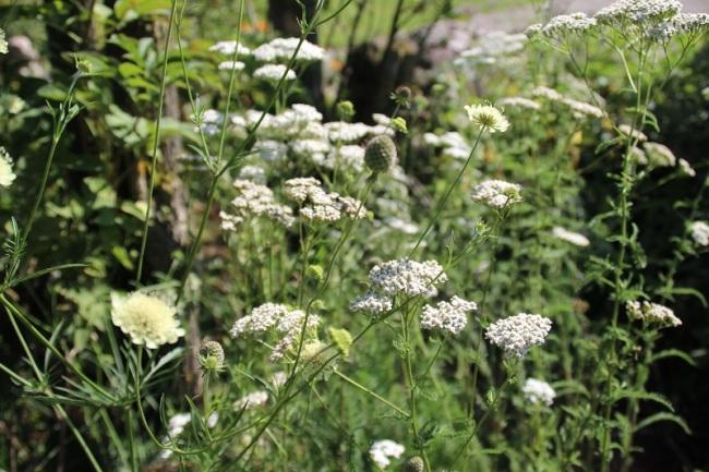 Bloemen uit Roemenië (5)