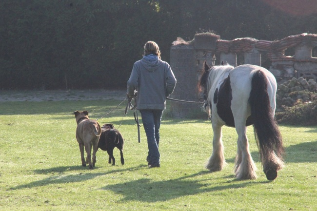 Jan en zijn dieren kl