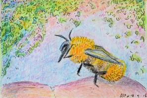 19-06-16 Kleine Bombus